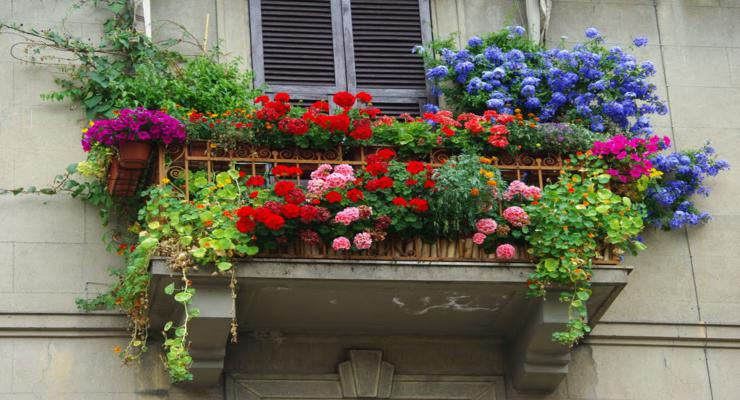 Plantas para balcones y terrazas hispania verde for Plantas para balcones