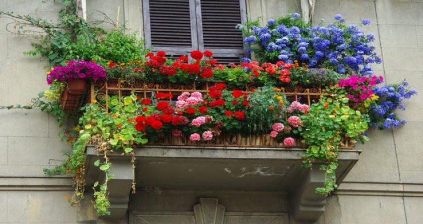 Plantas para balcones y terrazas hispania verde - Plantas para terrazas ...